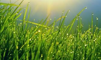 Грижи за тревни площи във влажно време